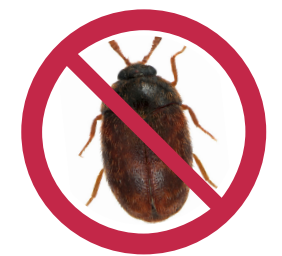 Raw Global Update: Khapra Beetle Warning