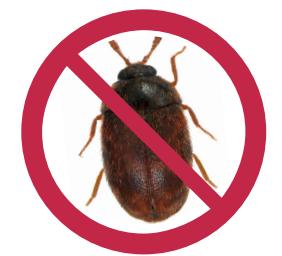 Raw Global Update: Khapra Beetle Warning